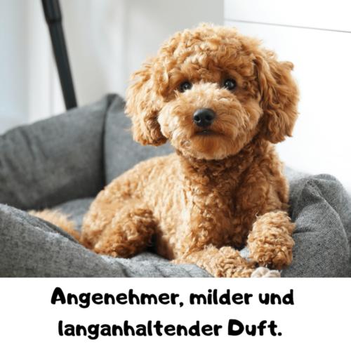 hunde conditioner